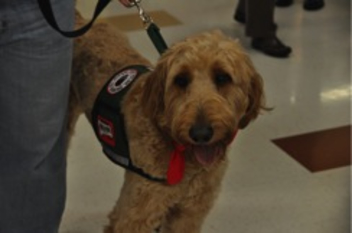 Since World War II, the world of service dogs has become wide and varied. Research has indicated that interactions with therapy dogs can temporarily affect the release of neurotransmitters in the brains. Levels of chemicals linked with bonding, reward, and motivation increase, while levels of chemicals linked to stress decrease. Photo courtesy of Elaine Anello