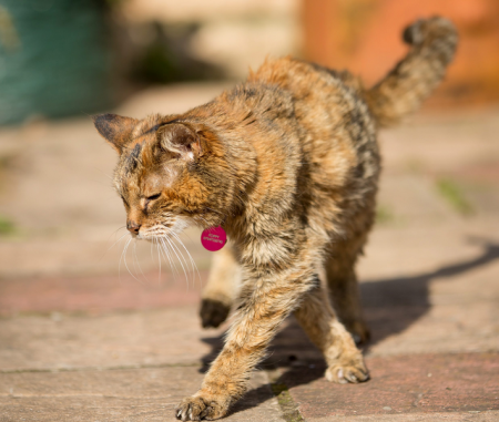 Poppy has lived for twice the age of the average house cat. Her owner also describes her as feisty and energetic in general.  Which are rare characteristics for an animal so old.