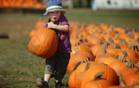 Demands for pumpkins are gradually increasing. In the past decade Starbucks has sold 200 million Pumpkin Spice Latte drinks in the past decade. Dunkin Donuts uses about 100 million pumpkin purees.