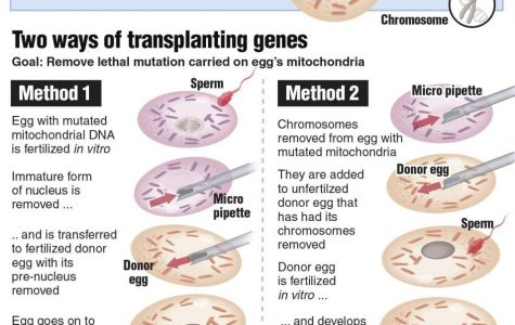 The visual above depicts the two different methods of 'mitochondrial transfusion'. One showing both eggs fertilized beforehand. The second method shows the egg being fertilized in post.