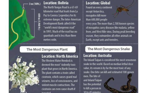 The most dangerous things in the world