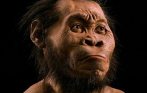 This is a recreation of Homo naledi created by National Geographic. The fossils found came from a broad population, with male and female, as well as old and young represented. The bones indicate a connection between the earliest known members of the Homo genus and the closest ancestors that preceded them.