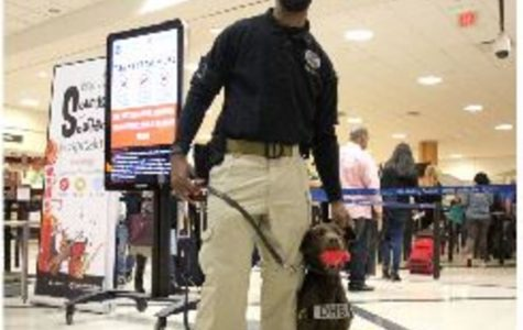 Specially trained dogs are often used along with metal detectors to spot terrorists. Although these steps were thought to be highly secure, the EgyptAir hijacking proved this wrong. Now critics are questioning the TSA methods.