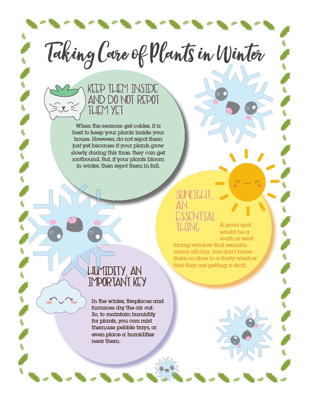 Taking care of plants in winter