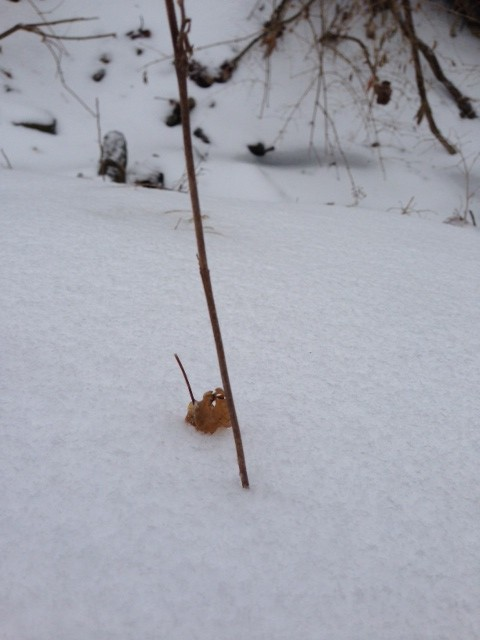 The snow surrounds anything on the ground.