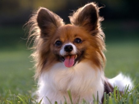 Talking dogs discover language