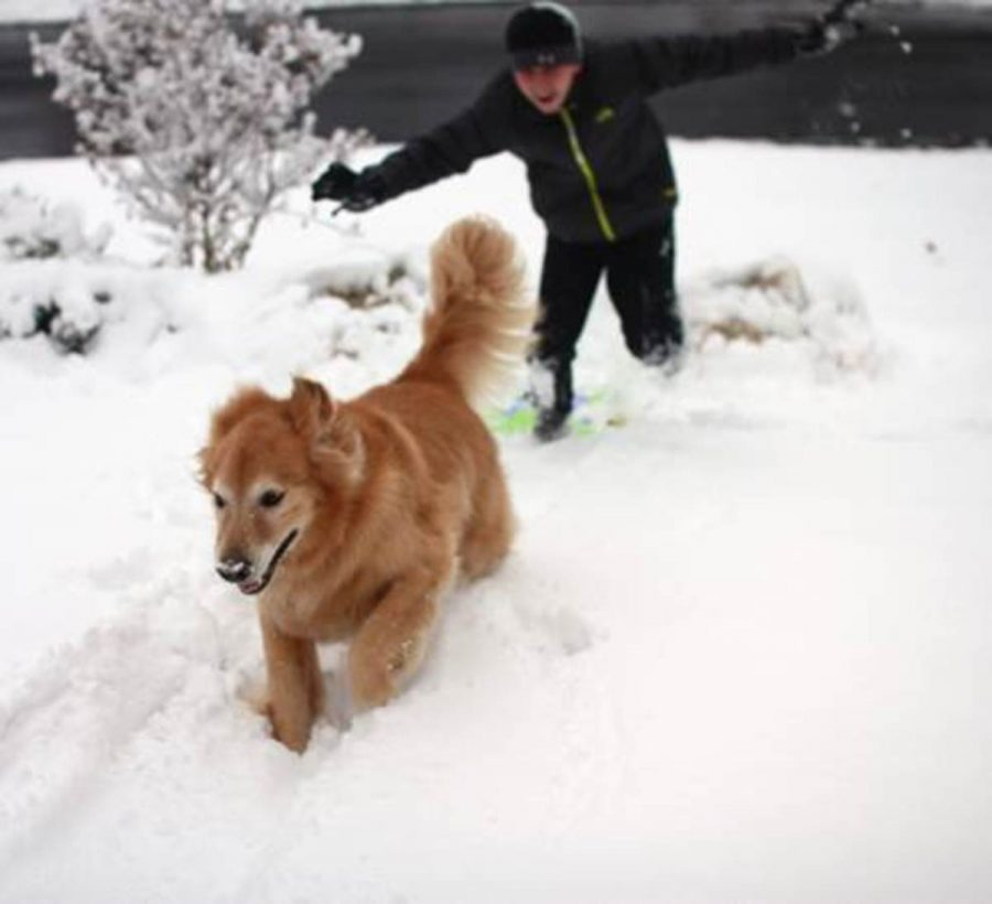 Senior, Lila Englander and Freshman, Jacob Englander took yesterdays snow day as an opportunity to play in the snow. They played with their dog and went sledding. This snow day is believed to be the first of many they we will experience this winter.