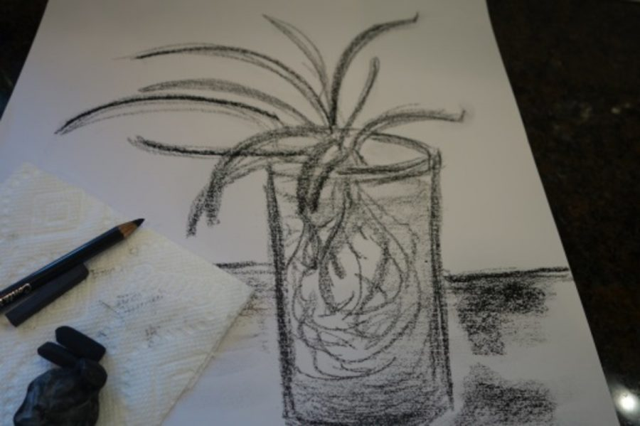 A+charcoal+drawing+of+a+spider+plant+is+shown+above.+The+charcoal+makes+a+great+contrast+in+the+lights+and+shadows+of+the+piece.+This+sketch+took+less+than+five+minutes+to+create%2C+making+this+an+excellent+medium+for+quick+sketches.+