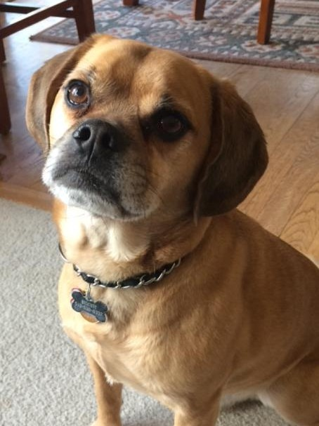 Biscuit%27s+dog+breed+is+a+puggle+which+is+a+mix+of+a+pug+and+a+beagle.+He+was+18+months+old+when+he+was+adopted+and+is+constantly+bringing+laughs+and+fun+into+the+Evans%27+family+life.