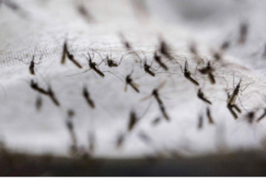 Malaria is an infectious disease caused  by protozoan parasites. It can be  transmitted from the bite of a mosquito  and can be deadly. Common symptoms  are a high fever, chills,  and sweating.
