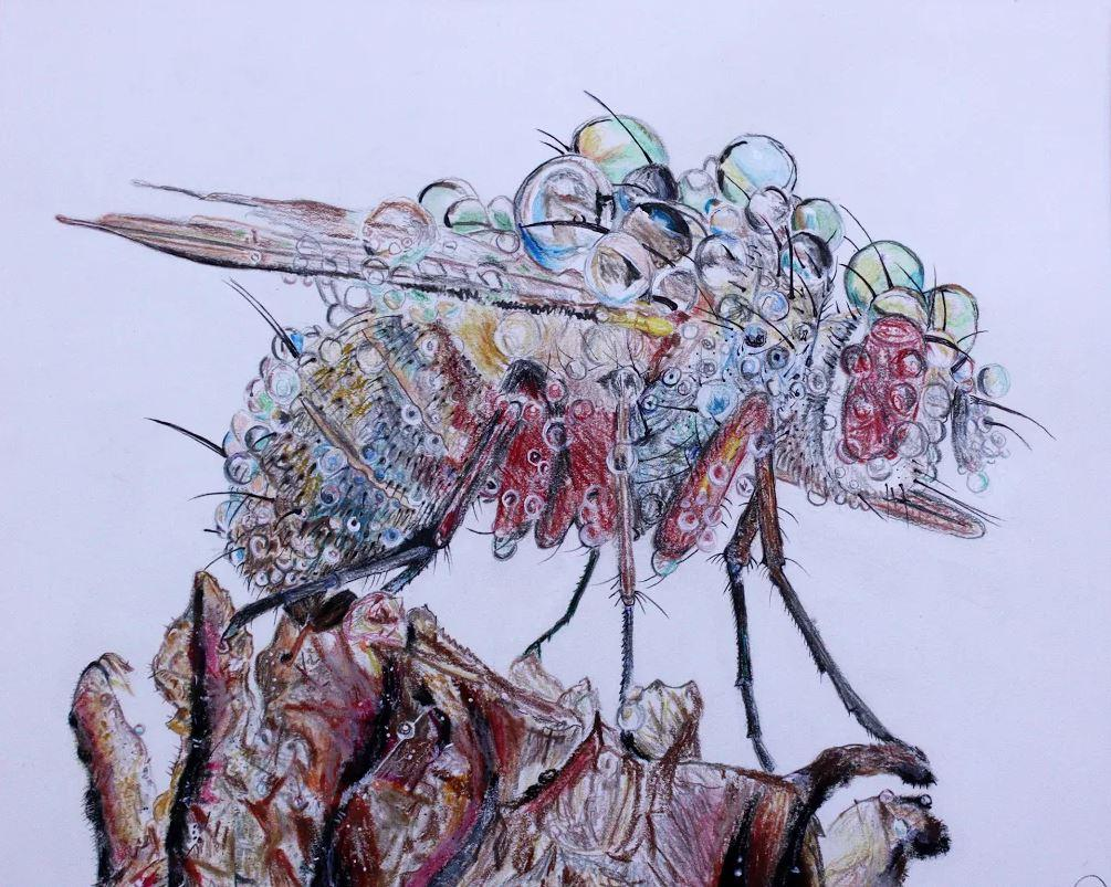 Dew Musca Domestica Sadye Goodman, 11  National Scholastic Silver Award  Drawing and Illustration