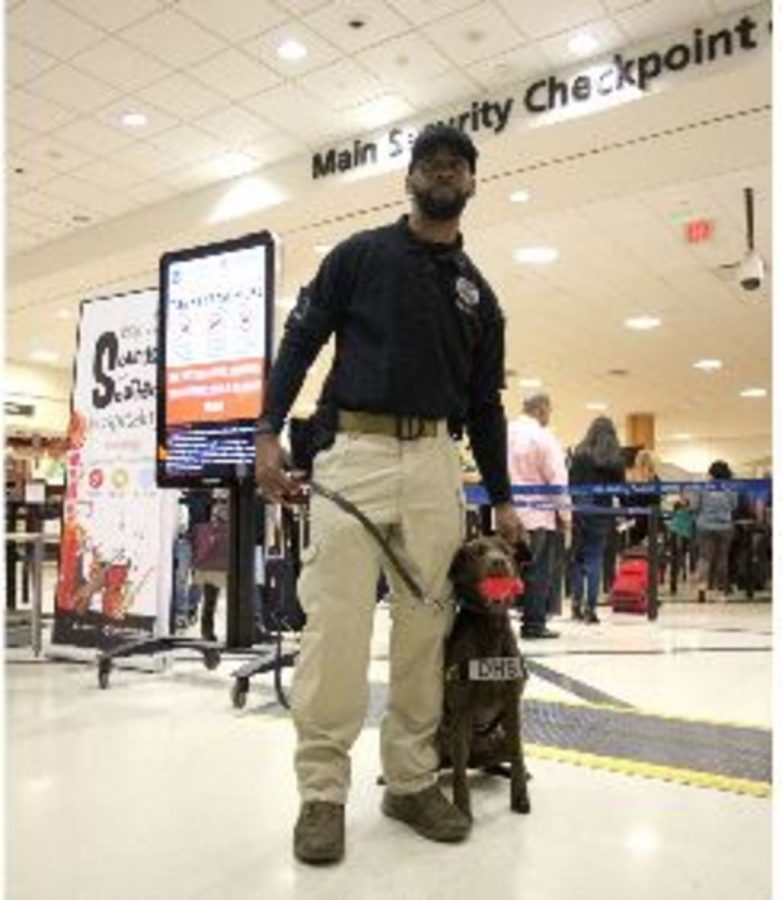 Specially+trained+dogs+are+often+used+along+with+metal+detectors+to+spot+terrorists.+Although+these+steps+were+thought+to+be+highly+secure%2C+the+EgyptAir+hijacking+proved+this+wrong.+Now+critics+are+questioning+the+TSA+methods.+