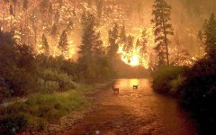 Forests going up in flames