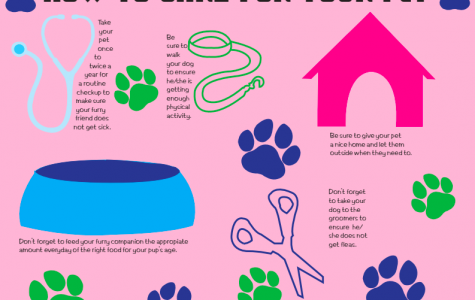 How to care for your pet